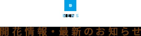 開花情報・最新のお知らせ