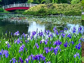 上野台公園の画像